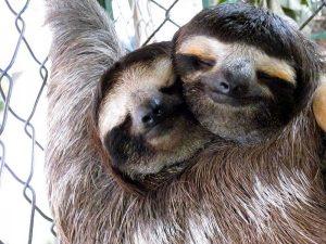 slothsinlove