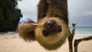 slothonabeach