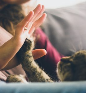 Cat high-fiving a person
