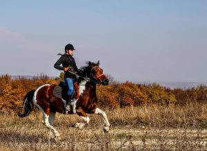 Young professional is riding a horse in an open field